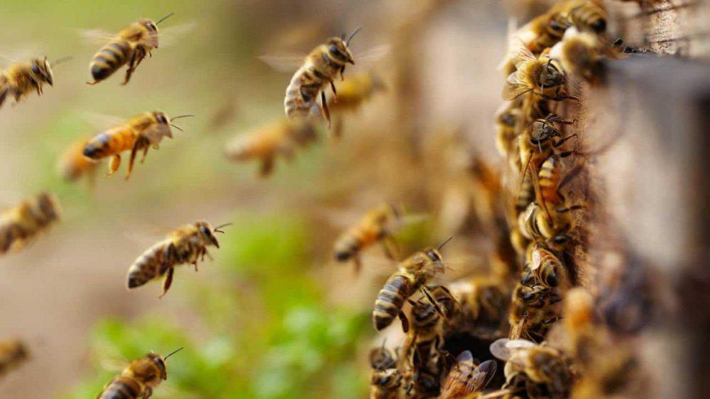На Тернопільщині молодий чоловік помер від укусів бджіл