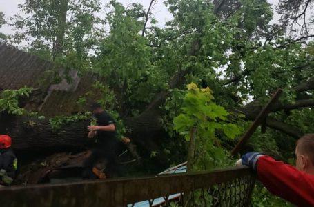 Дерево впало на дачу – під час буревію загинула молода жінка