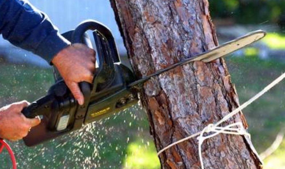 На Тернопільщині дерево смертельно травмувало лісоруба