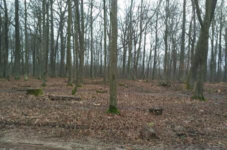 На Тернопільщині у лісі загинув 48-річний чоловік