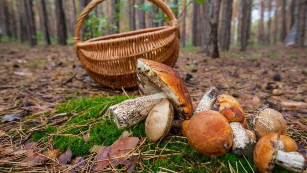 На Тернопільщині спіймали порушника карантину – ходив у ліс за грибами без паспорту