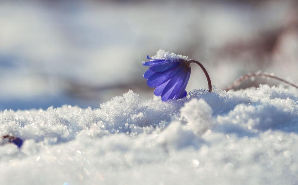 Після морозів та снігопадів на Тернопільщину іде різке потепління
