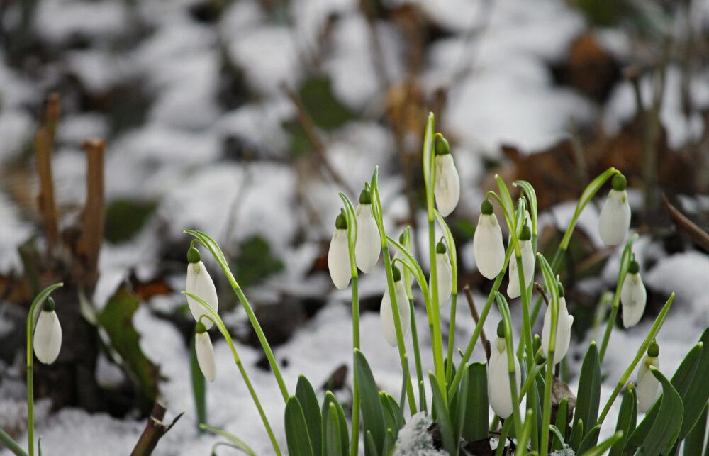 Погода на Тернопільщині у вихідні: ще трохи снігу і далі потепління