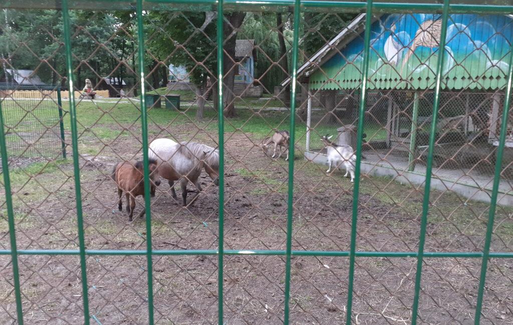 Тернопіль, парк Топільче, зоокуток, поні