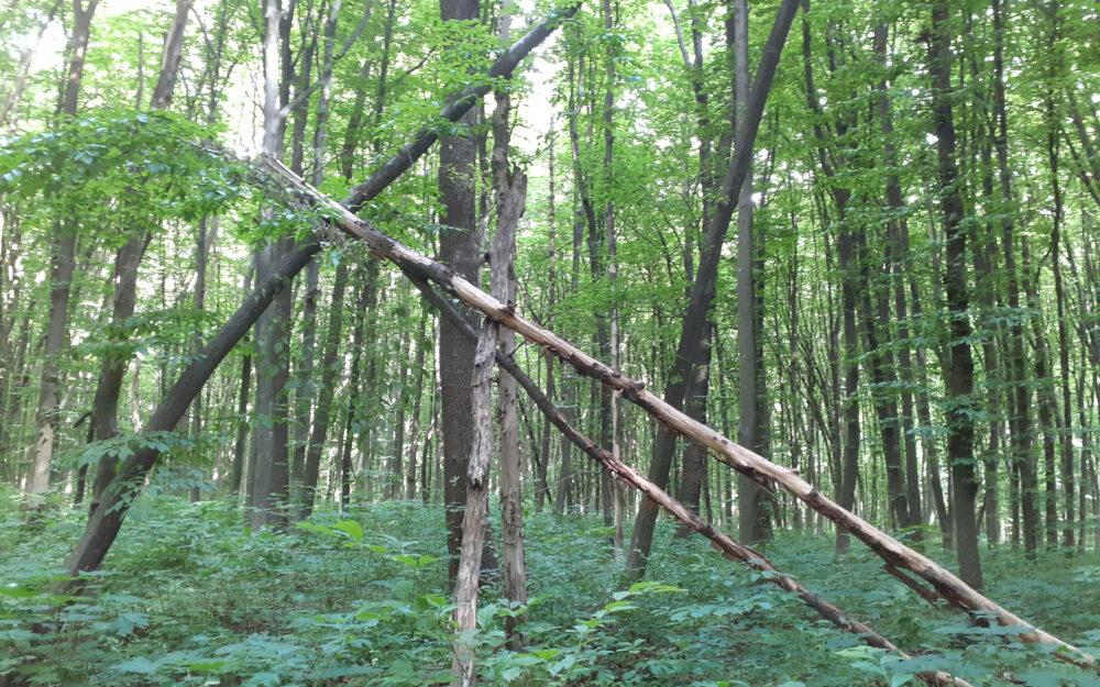 ліс, дерева, Гусятинщина