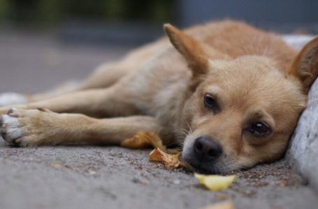 На Борщівщині чоловік убив сусідського собаку і викинув тіло у криницю